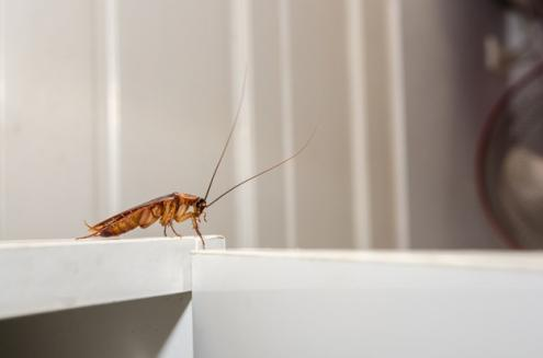 วิธีกำจัดแมลงร้ายบุกบ้านในแต่ละห้อง