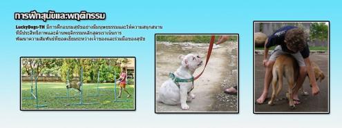 LuckyDogs-TH ศูนย์ฝึกสุนัขและแมว & รับฝากสัตว์เลี้ยง