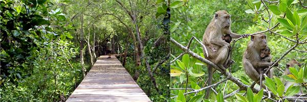 สัมผัสบรรยากาศของความอุดมสมบูรณ์ ณ โรงเรียนธรรมชาติป่าชายเลน ร่วมอนุรักษ์และขยายพื้นที่ป่าชายเล่น สร้างแนวกั้นคลื่นตามธรรมชาติ
