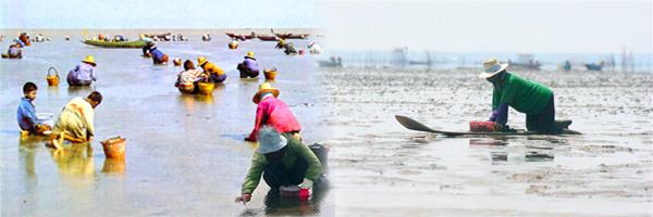 ร่วมกิจกรรมการจับหอยหลอด (หยอดหอย)
