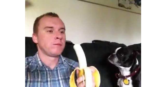 วิธีป้อนกล้วยน้องหมา ที่คุณเห็นแล้วต้องอมยิ้ม