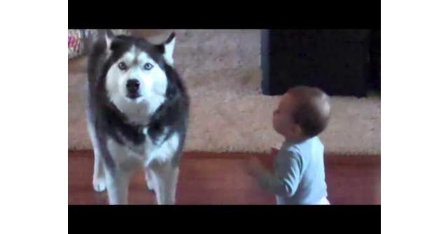 คลิปหมาและเด็กน้อยสงสัยจะคุยกันรู้เรื่อง